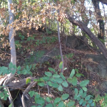 Proctor's Ledge- the exact spot the hangings took place