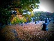 graveyard-3